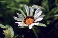 fototapeta - kwiaty