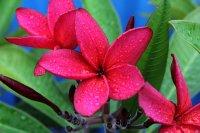 kwiat fototapeta